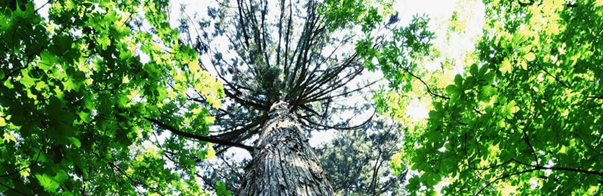 Tree   ESOC CIRES