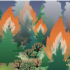 How do landscapes recover after a wildfire?