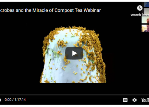 Screenshot of microbes webinar on youtube