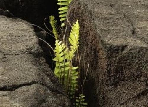Plant growing in rocks