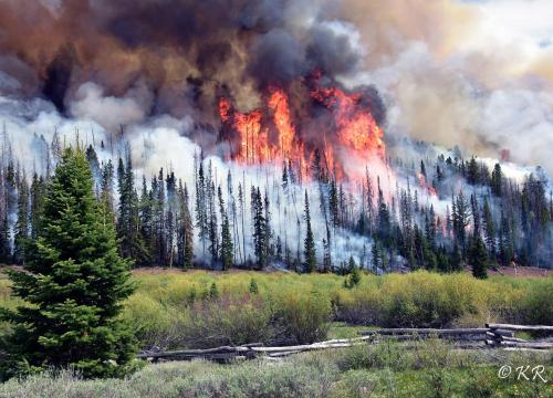 A billowing forest fire.