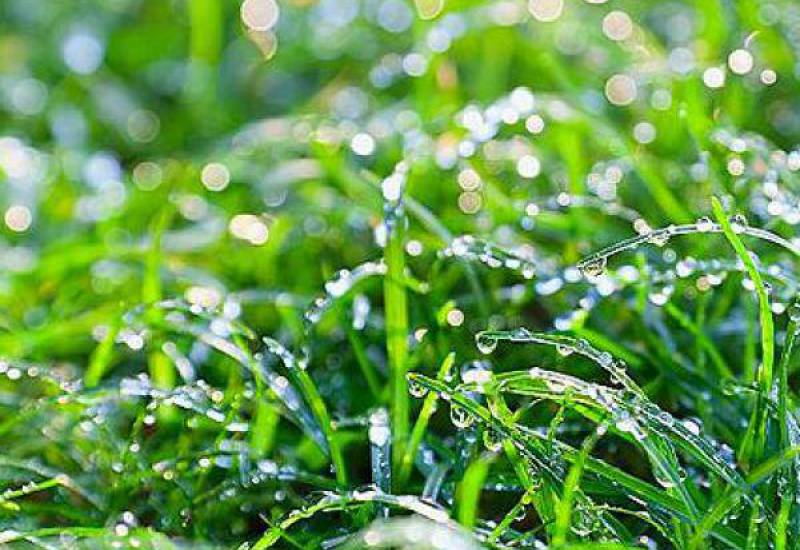 Global Health Group Water dew forming on grass