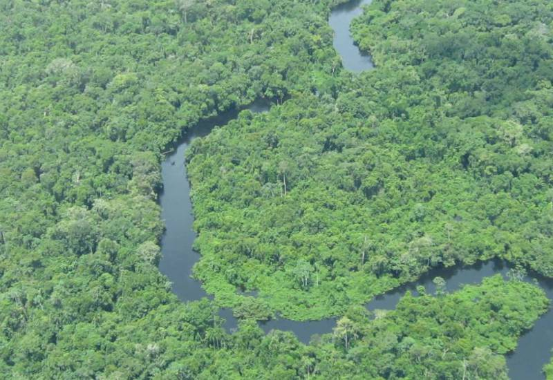 River and Amazon forest