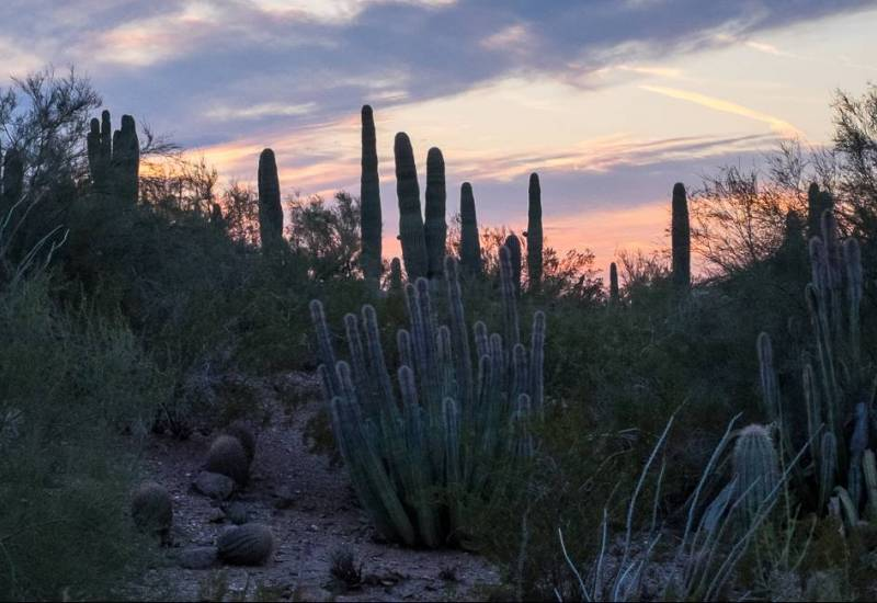 Cactuses at the Desert Botanical Garden Phoenix