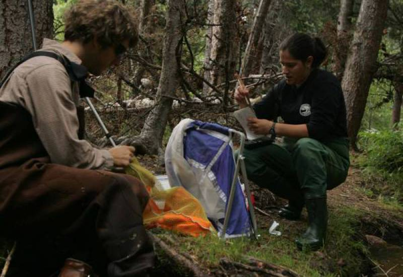 Students engaged in research in a forest